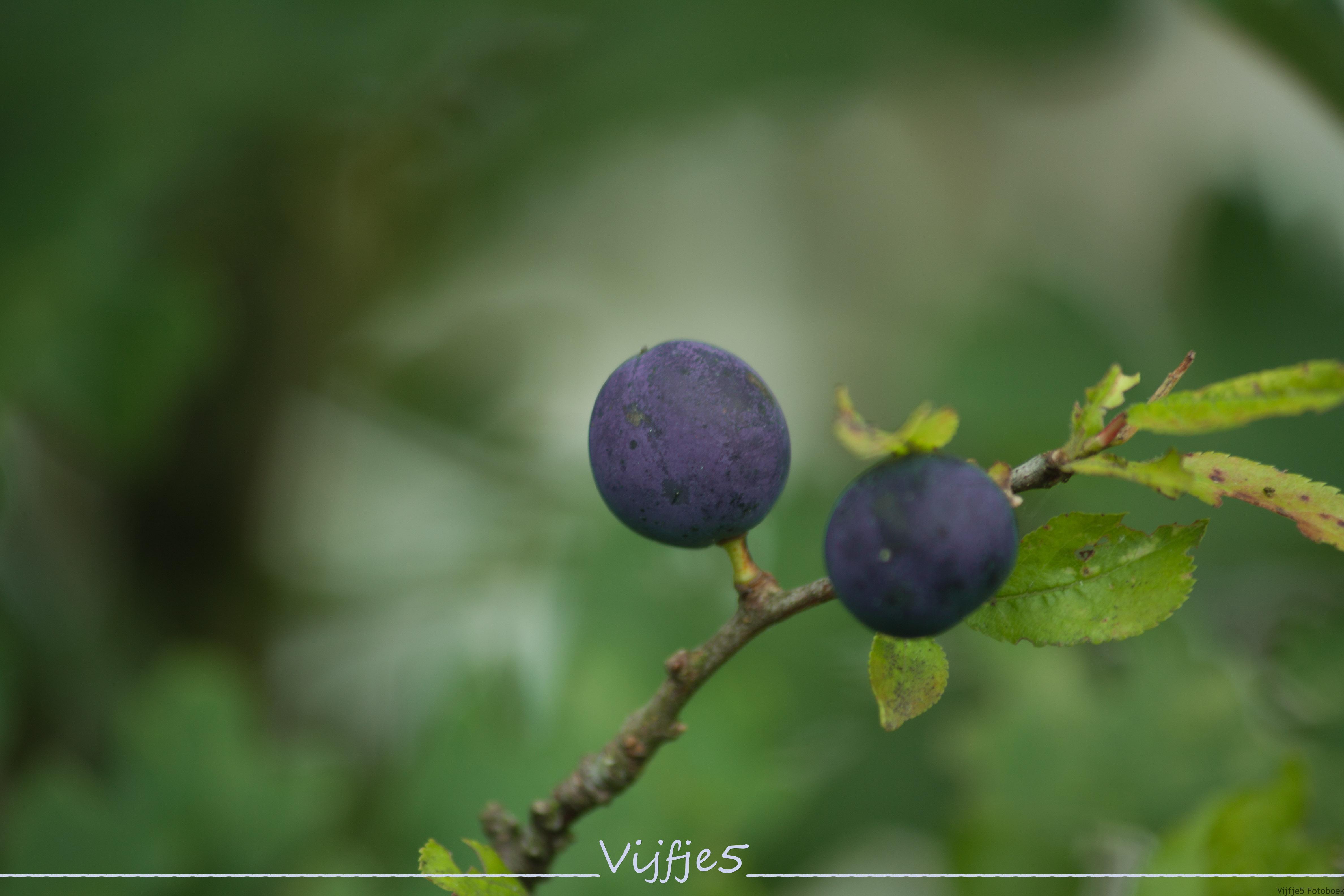 IMG_9713